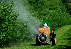 Tractor spraying insecticides on apple trees
