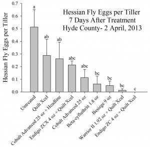 Cover photo for Should You Spray for Hessian Fly?
