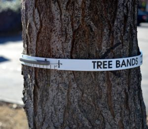 Cover photo for New Citizen Science Project to Measure Tree Growth