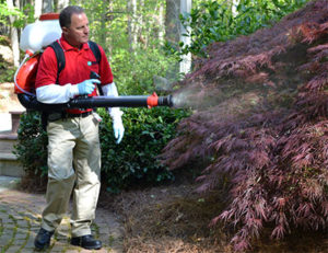 Treating shrubs that are resting sites for mosquitoes.