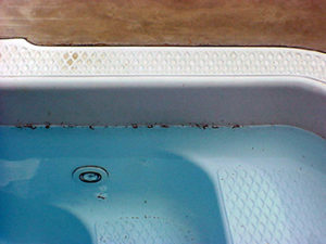millipedes in a swimming pool.