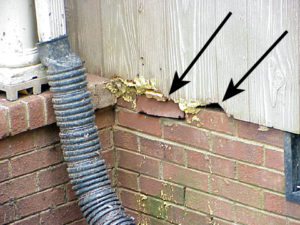 Rat chewing damage to house siding. (Image - M. Waldvogel)