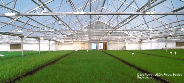 crop growing in greenhouse