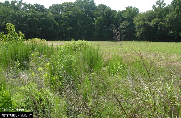 fallow field border
