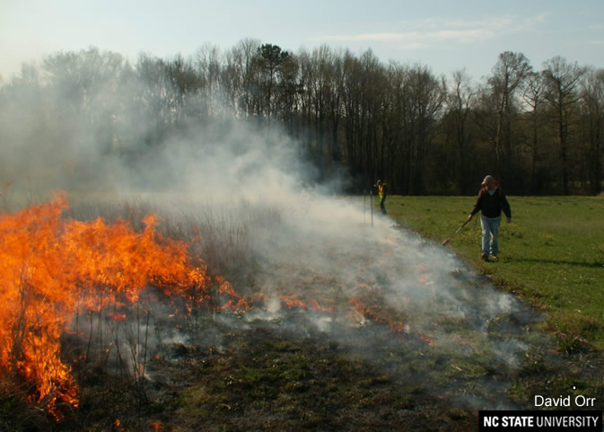 Controlled burn of a field