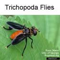 Trichopoda Files