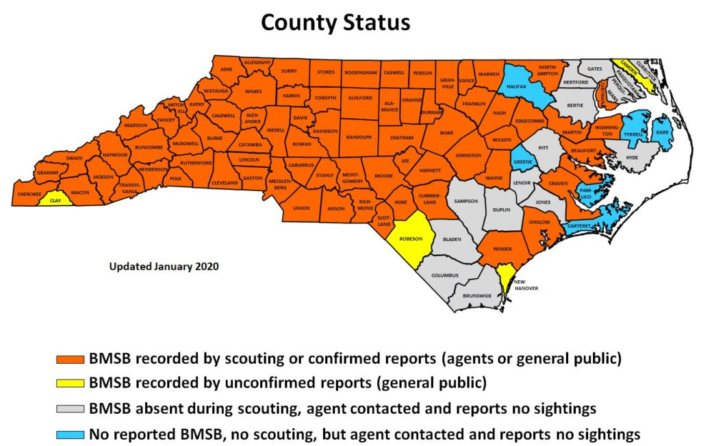 Map of BMSB sightings in NC by county