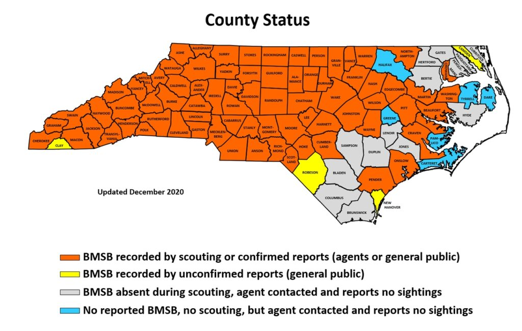 Map of North Carolina counties with BMSB sightings